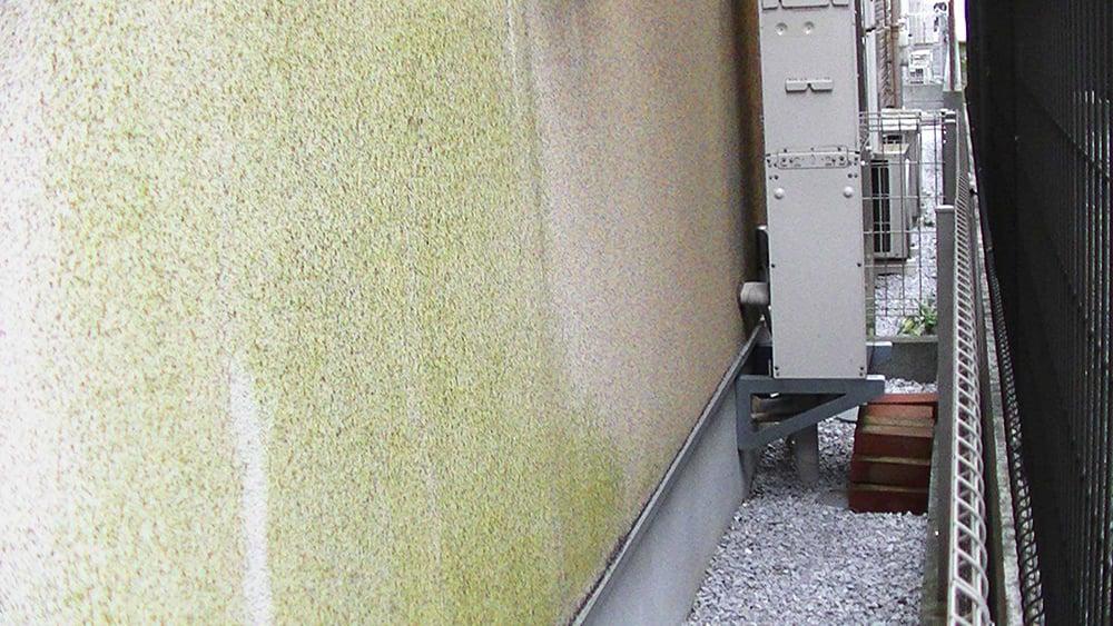 壁にコケや汚れがあるけど、大丈夫?